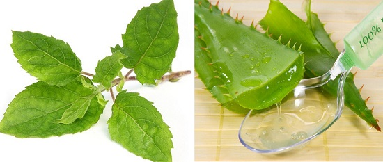 Home Remedies to Clear Pimples on Men tulsi and aloe vera