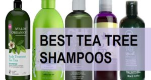 best tea tree shampoos in india