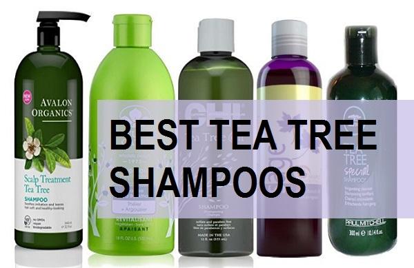 best tea tree shampoos in india